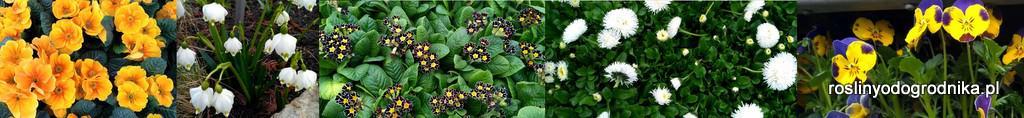 rośliny od ogrodnika blog
