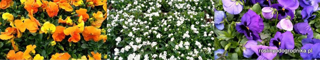 rośliny od ogrodnika